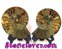 Ammonite Fossil / ฟอสซิลหอย-คู่ [12039371]