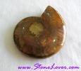 Ammonite Fossil / ฟอสซิลหอย [71624]