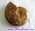 Ammonite Fossil / ฟอสซิลหอย [71626]