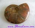 Ammonite Fossil / ฟอสซิลหอย [71627]