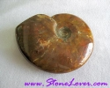 Ammonite Fossil / ฟอสซิลหอย [71628]