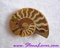 Ammonite Fossil / ฟอสซิลหอย [71650]