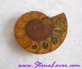 Ammonite Fossil / ฟอสซิลหอย [71652]