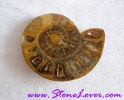 Ammonite Fossil / ฟอสซิลหอย [71654]