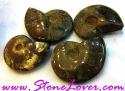 Ammonite Fossil / ฟอสซิลหอย [71656]