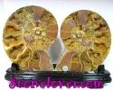 Ammonite Fossil / ฟอสซิลหอย [12069602]