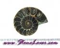 Ammonite Fossil / ฟอสซิลหอย [08044169]