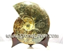 Ammonite Fossil / ฟอสซิลหอย [13081101]